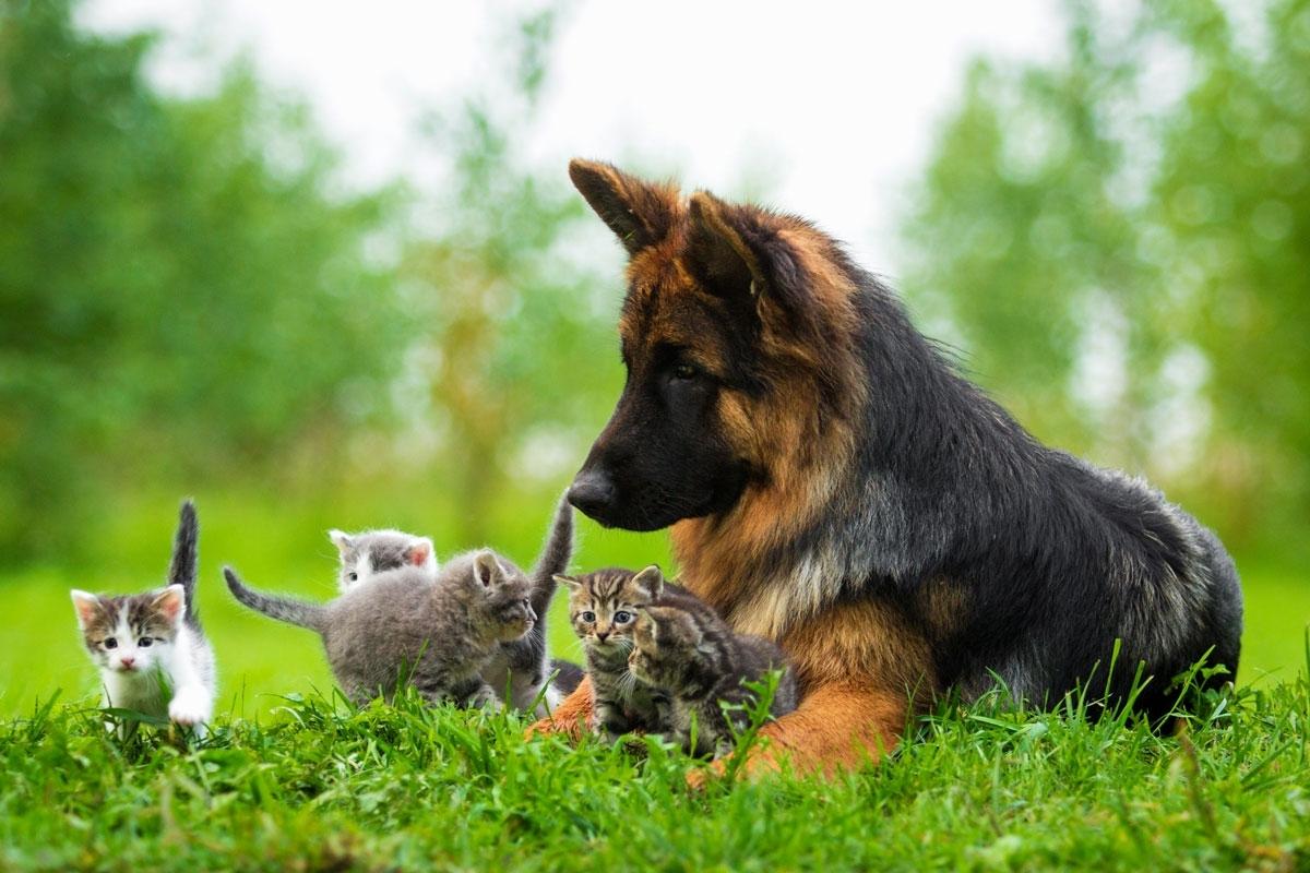 Animali amici miei!